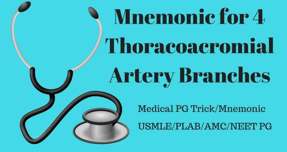 Thoracoacromial Artery Branches Mnemonic