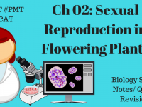 02. Sexual Reproduction in Flowering Plants