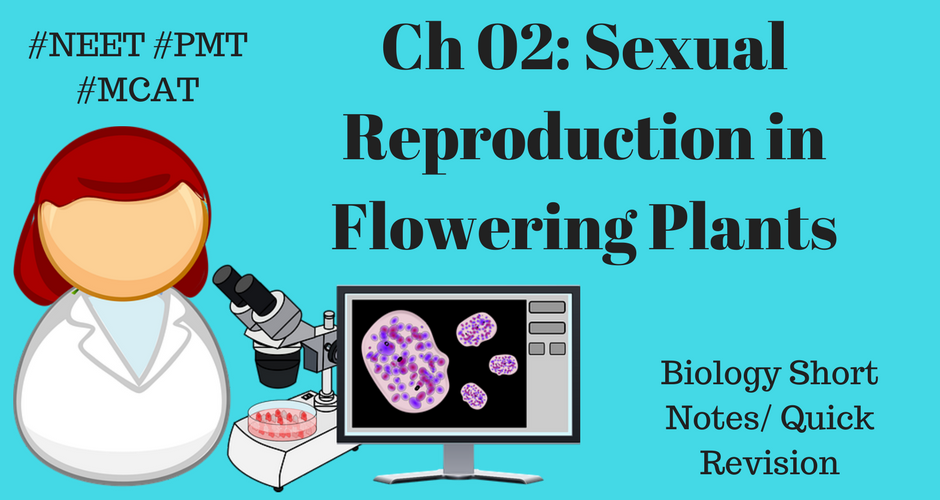 Sexual reproduction in plants notes